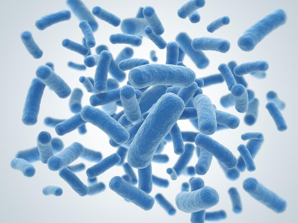 e coli culture